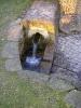 Wasserlösung, heute als Wasserquelle Sieringhoek bezeichnet