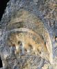 Gliederfüßer (Riesentausendfüßer) Arthropleura armata Paratergit