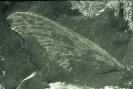Tierische Fossilien