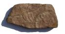 Sandsteinplatte mit Trockenrissen + Wellenrippeln