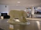 Eisbär im Flughafengebäude